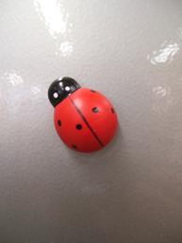 Lieveheersbeestje Magneet Hout klein